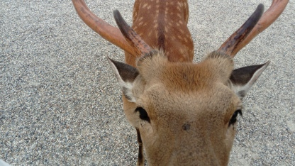 Deer up close