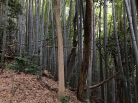 Bamboo forest III