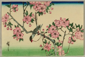 Bird and cherry blossoms- Hiroshige