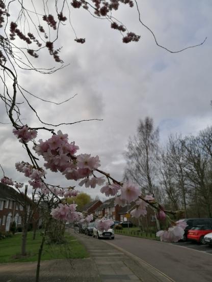 Blossom Blog 5