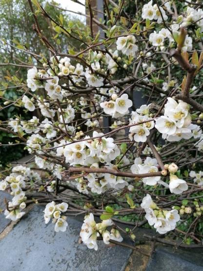 Blossom Blog 6